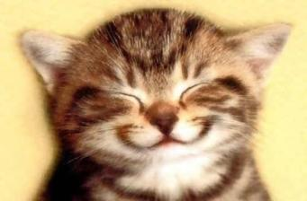 Cat-Smiley-Face